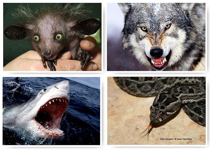 13 самых страшных животных по версии WWF