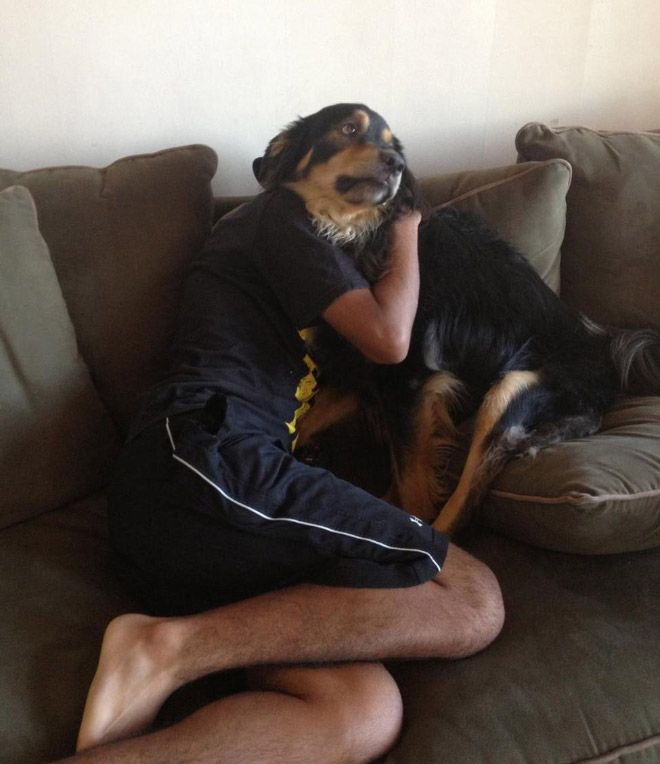 Фотографии собак, сделанные в удачный момент