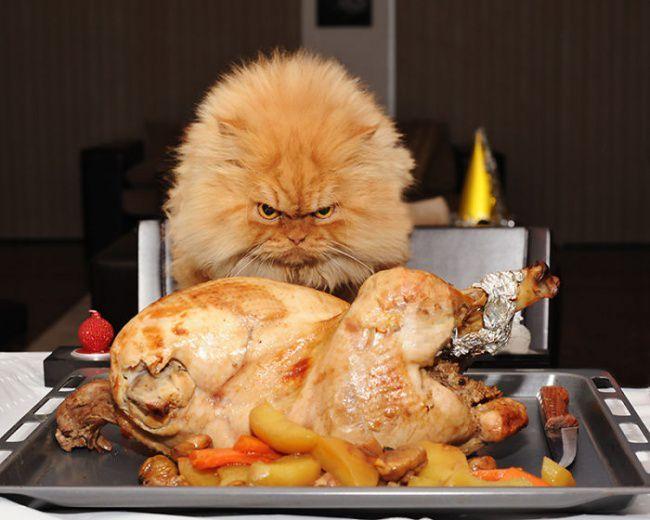 Гарфи — суровый кот, смотрящий на тебя, как на мышь