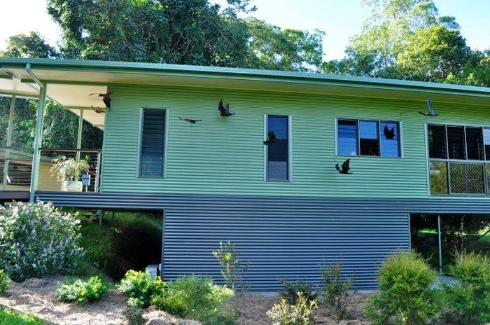 Клиника для раненых летучих мышей в Австралии