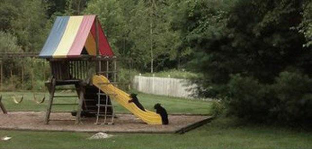 Медведица сводила детей в парк развлечений