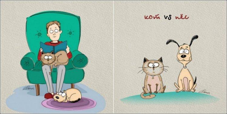 О различиях между котами и собаками