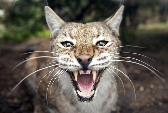 Шикарные фотографии животных