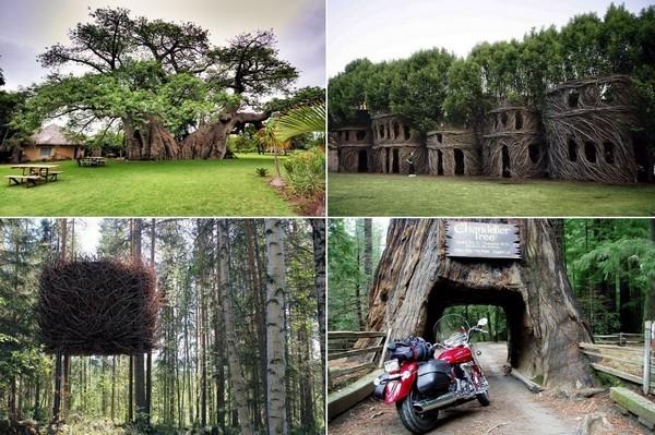 Сооружения в больших деревьях