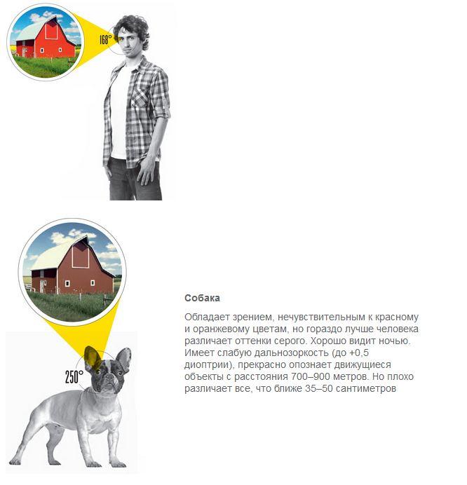 Сравнение зрения человека и животных