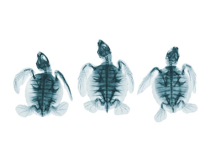 Фотографии, сделанные с помощью рентгена