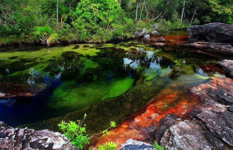 Каньо-Кристалес — река пяти цветов