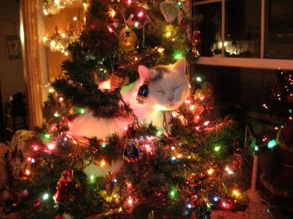 Животные и новогодние елки