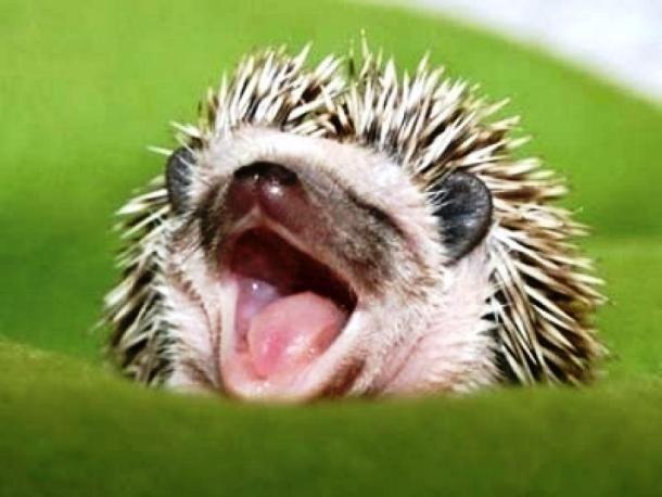 25 зевающих животных