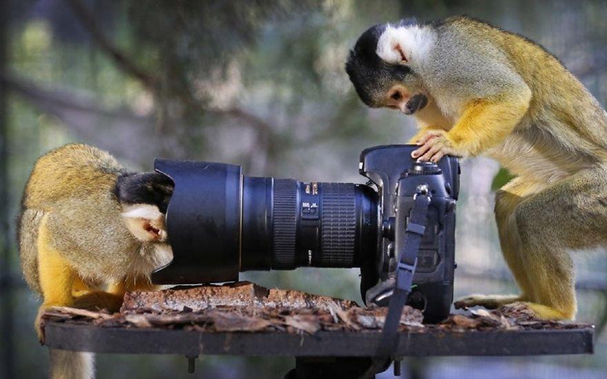 Когда животные увлечены фотографией