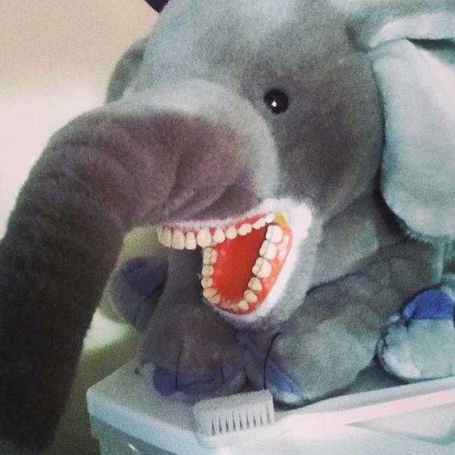 На чем тренируются студенты-стоматологи