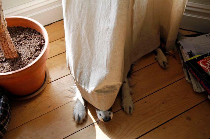 Собаки любят прятаться от своих хозяев