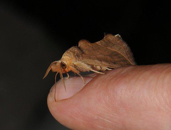 Тропические бабочки — кровососы