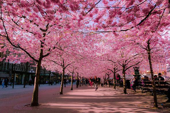 Волшебные улицы в тени цветов и деревьев
