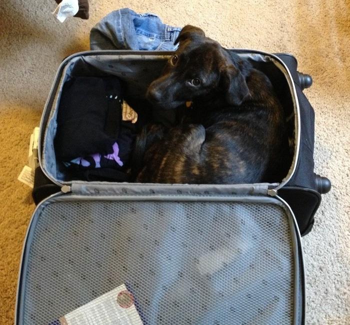 Животные готовы составить компанию в путешествии