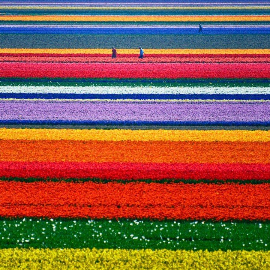 Фотографии с выразительной цветовой палитрой