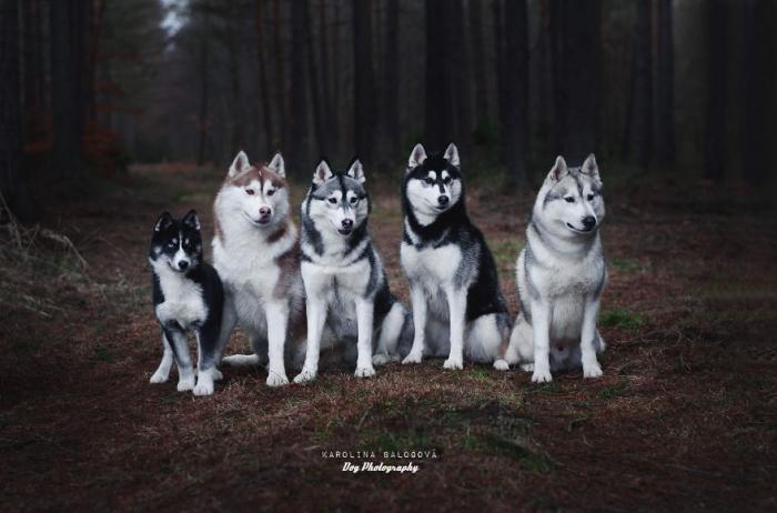 Милые портреты собак