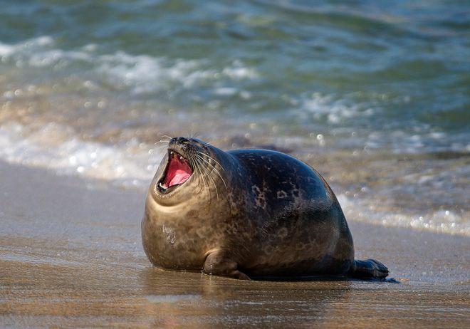 скачать морские котики торрент - фото 9