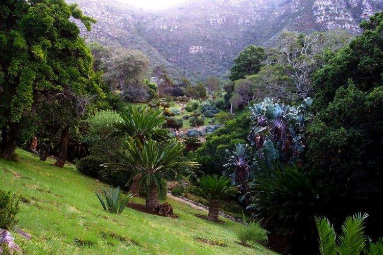 Сад Кирстенбош — царство флоры в Южной Африке