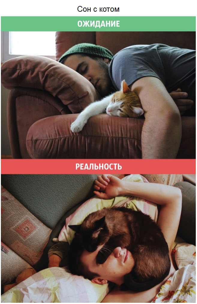 Коты: ожидания и реальность