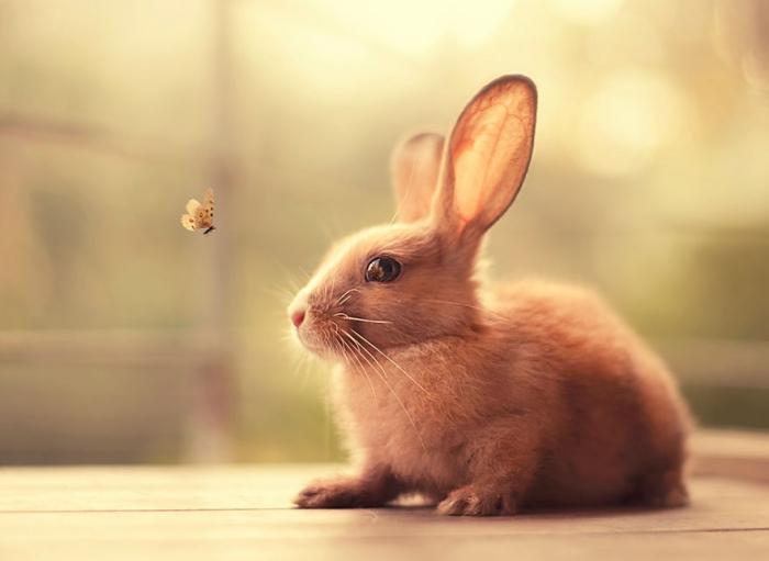 Милые фото кроликов