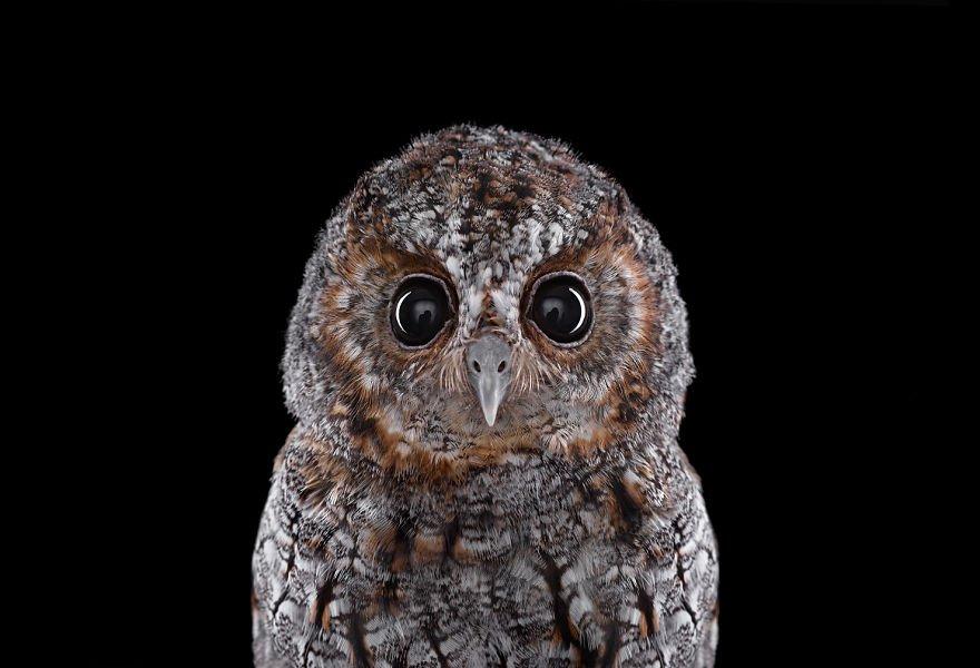 Мистические совы от фотографа Брэда Уилсона