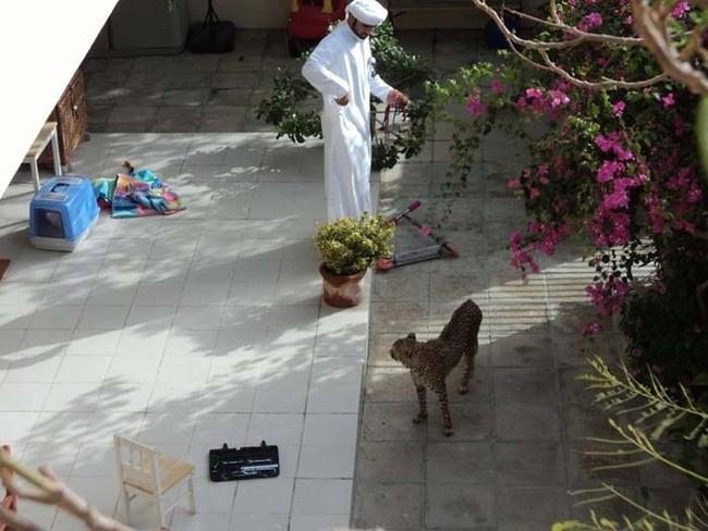 Необычные фотографии из Дубая