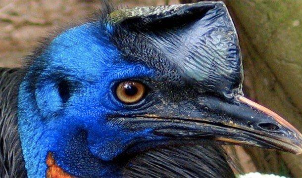 Опасные животные, которые выглядят обманчиво безопасными
