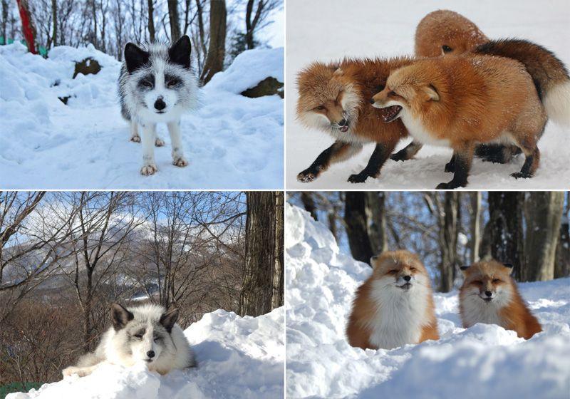 Японский приют для лис