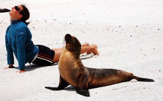 Забавные животные занимаются йогой