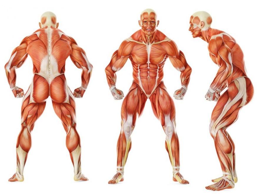 Защитные механизмы нашего тела