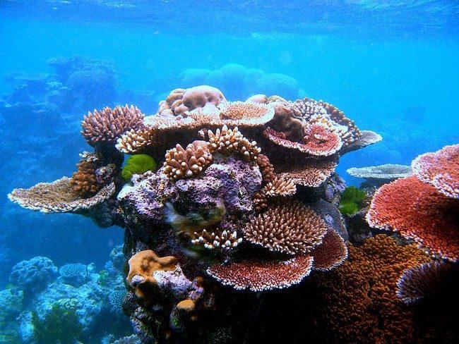 15 потрясающих фактов об океане