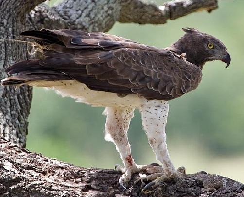 Десять самых больших птиц мира