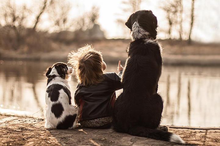 Дружба мальчика и трех собак