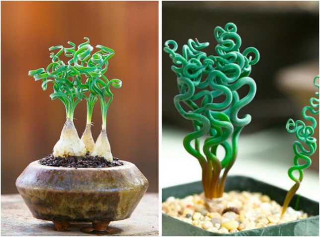 Экзотичные растения, которые могут расти у вас дома или во дворе