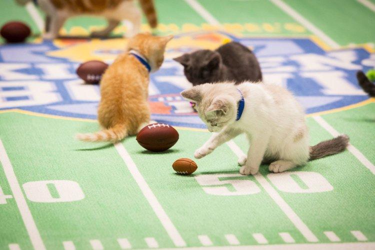 Футбольный чемпионат для котят – Kitten Bowl
