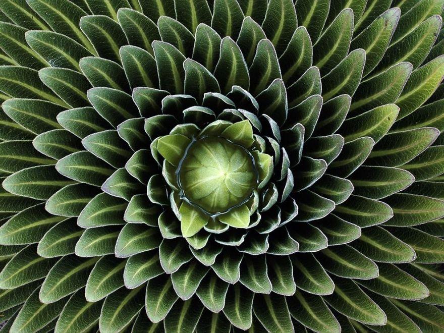 Геометрия у растений