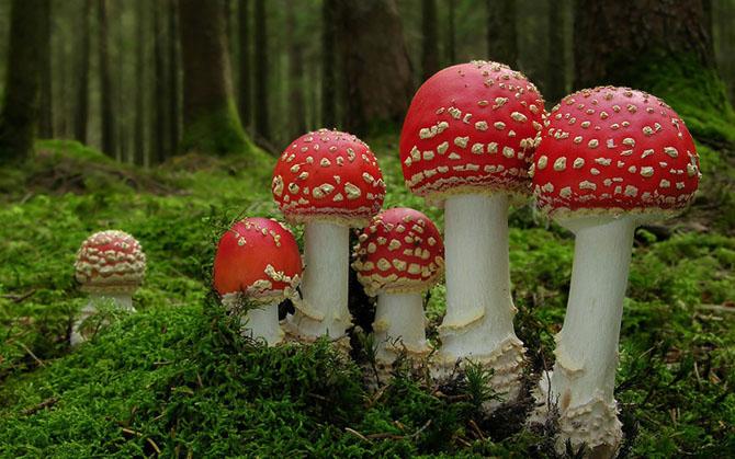 Как растут грибы в гифках