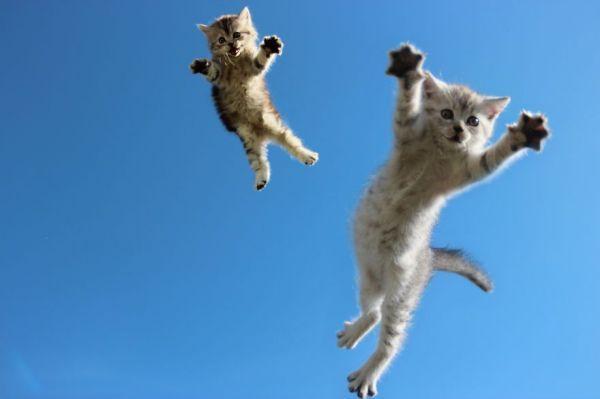 Котики в полете