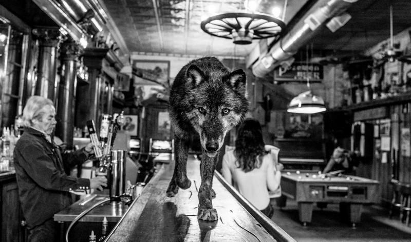 Необычные фотографии диких животных от Дэвида Ярроу