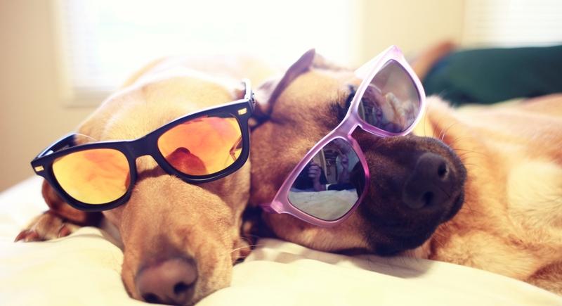 Подбираем солнцезащитные очки к лету