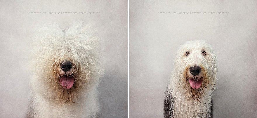 Сухая собака, мокрая собака от фотографа Серены Ходсон