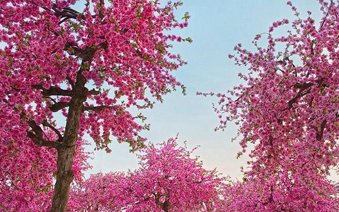 Японский сад во Вьетнаме