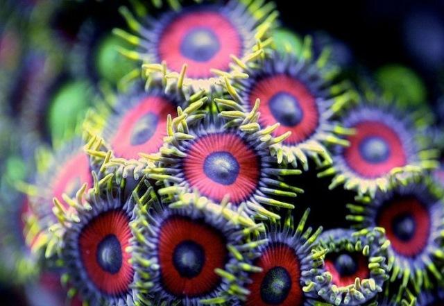 Интересные ответы на вопросы о коралловых рифах