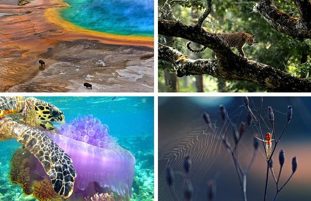 Лучшие работы с конкурса фотографии Общества биологии