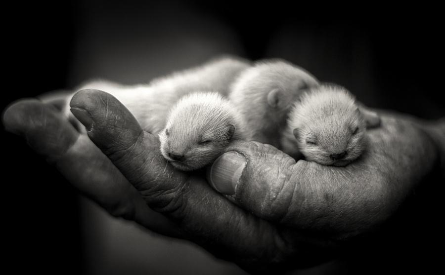 Новорожденные детеныши, которые помещаются в ладошку