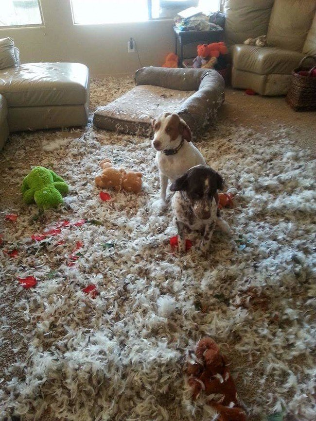 Провинившиеся домашние животные