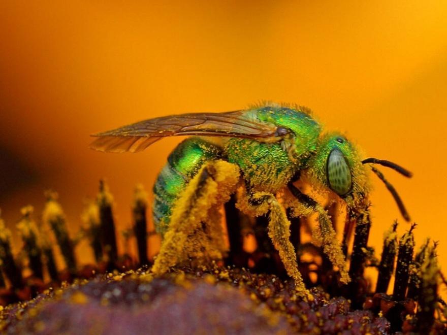 Самые болезненные укусы насекомых