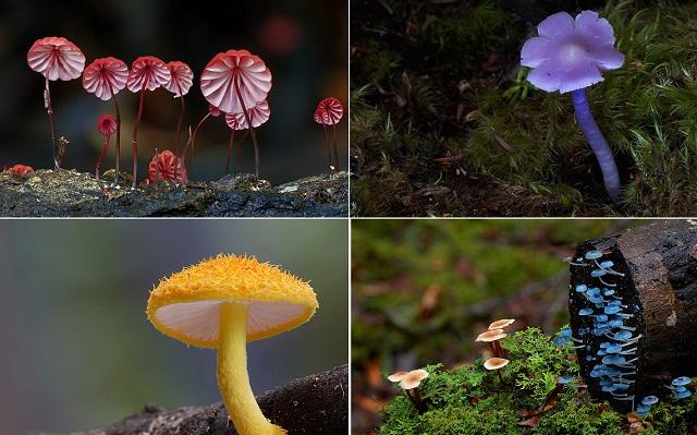 Удивительные фотографии грибов от Стива Аксфорда