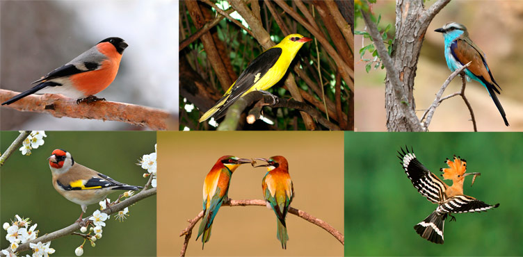 Яркие птицы Крыма